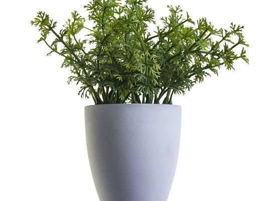 Nep planten voor thuis