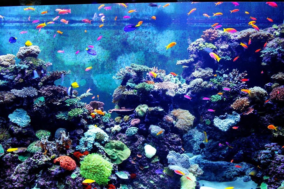 De populairste vissen voor in je zeewateraquarium