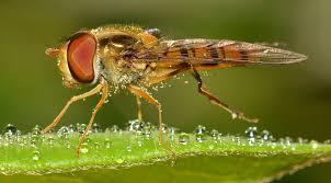 Zo kun je insecten tegen gaan