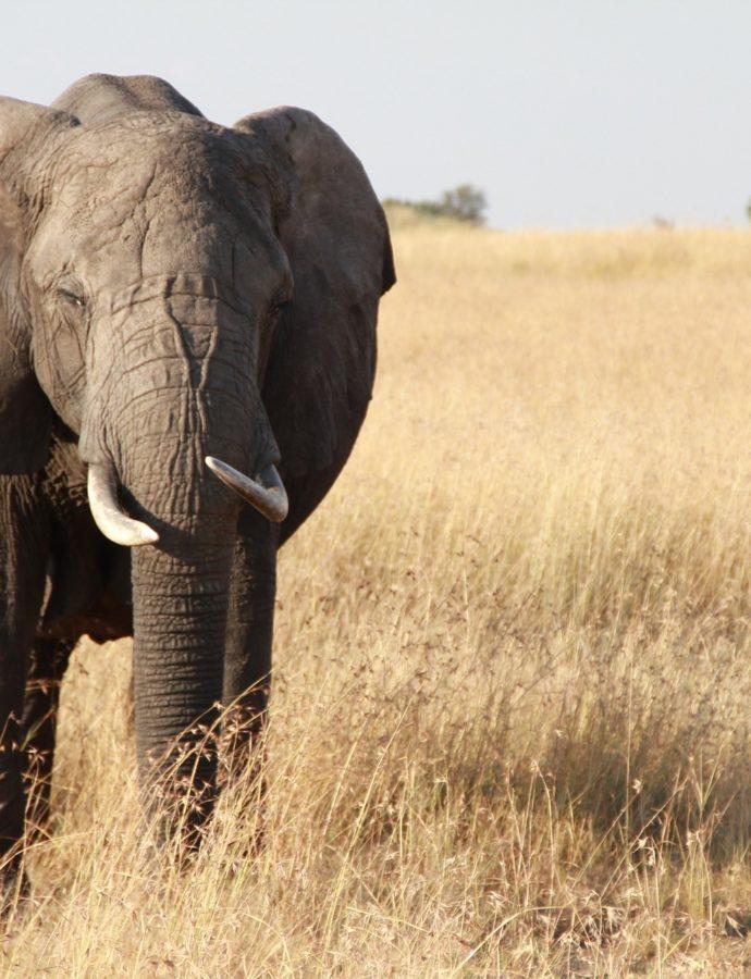 Een bijzondere Tanzania rondreis